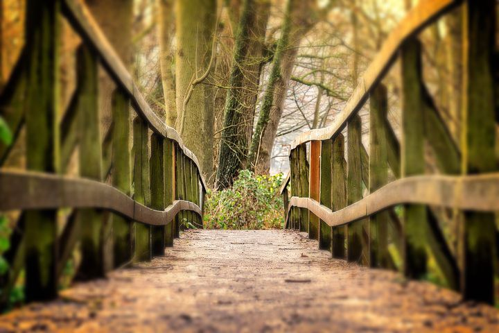 focal bridge