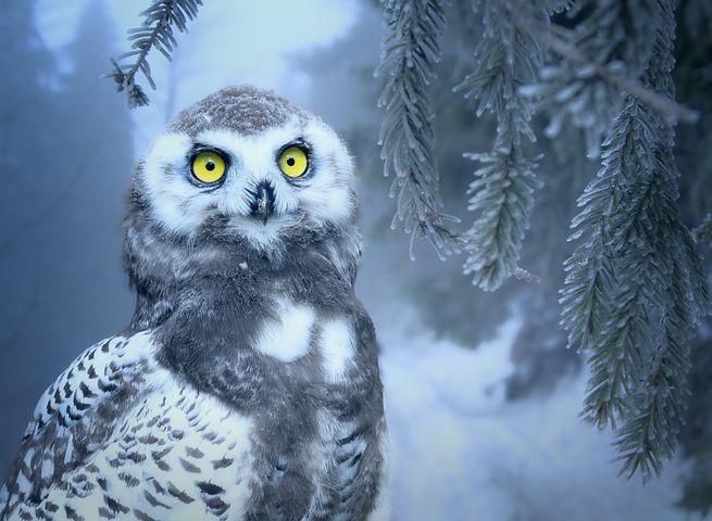 owl-3184032__480