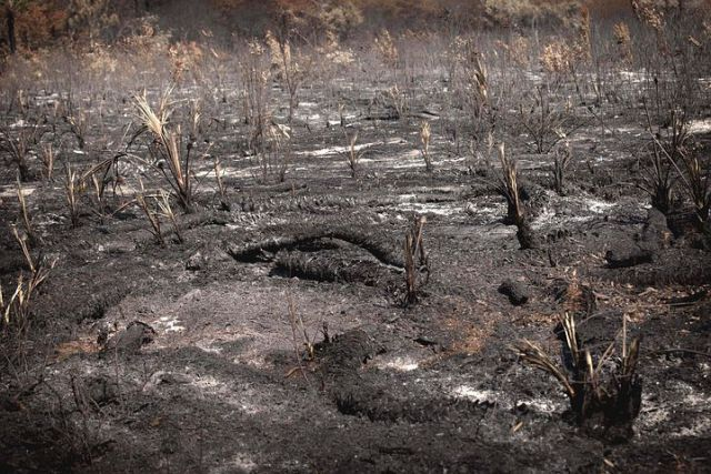 burned-1810449__480