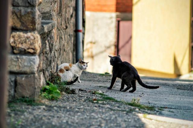 belligerentcats