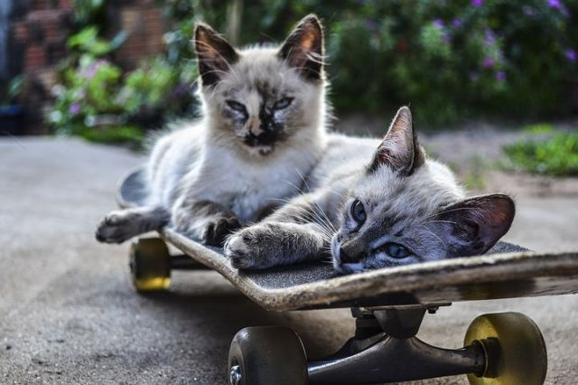 catskaters