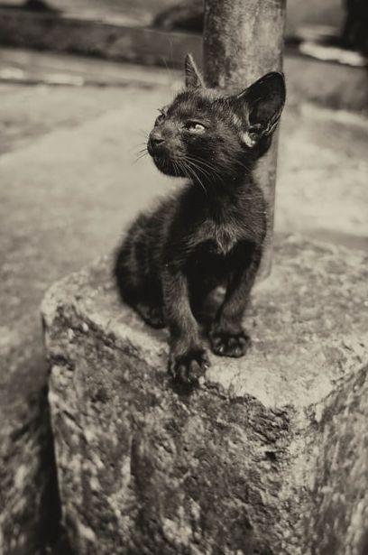 kittenheadedkit