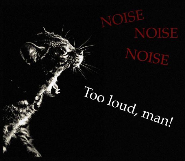 noisecat