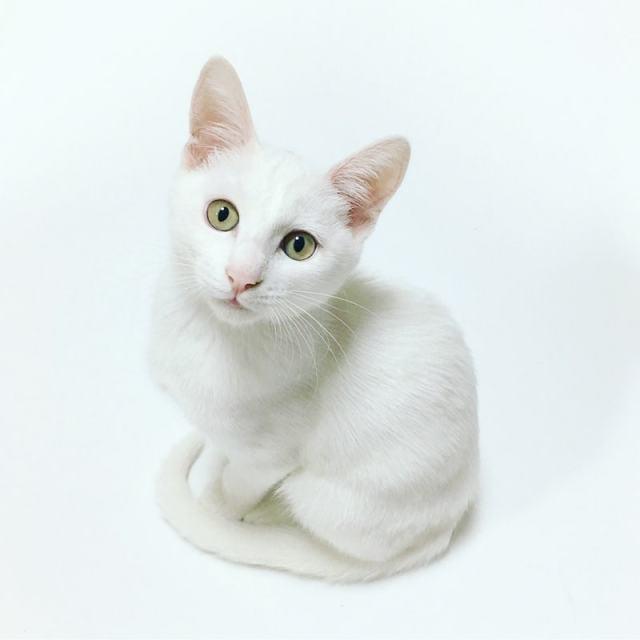 whiteonwhitecat
